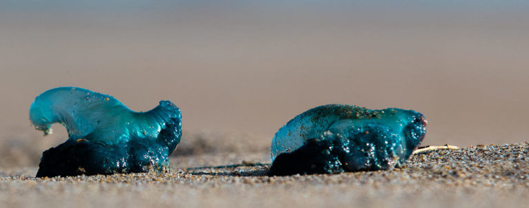 Blue stones rounded by water lying on the beach, close-up shot