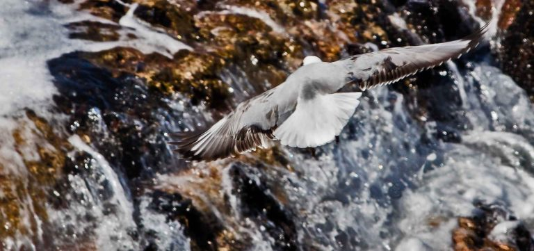 A soaring bird flies over a waterfall