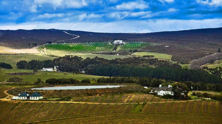 Vineyards on a hill in South Africa, view from a distance